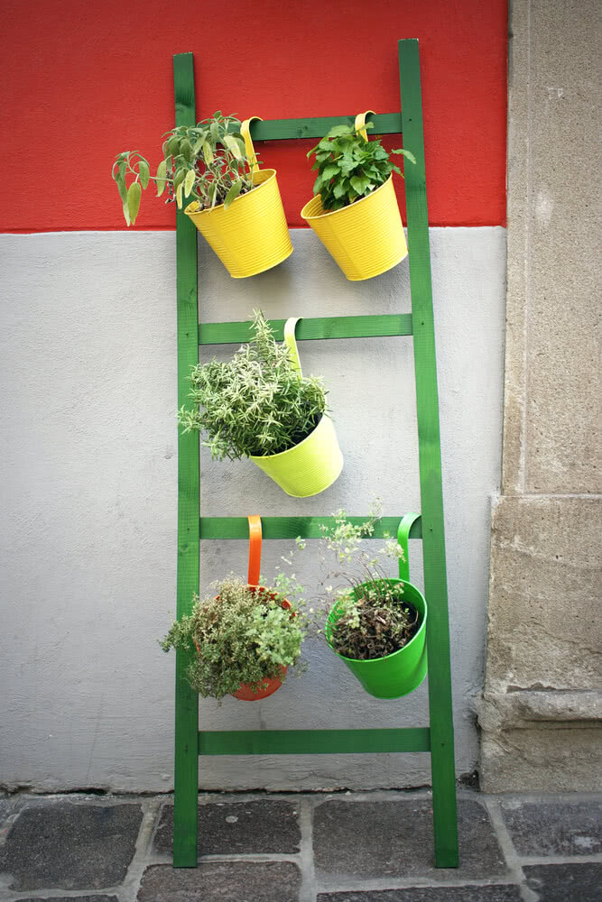 plants placed vertically on ladder
