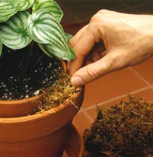 Double Potting Method to increase plant humidity
