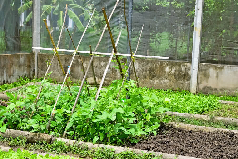 plant trellis for vegetable garden