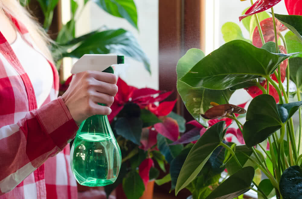 plant humidifier - spraying plants with water