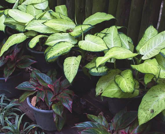 humidifier plants