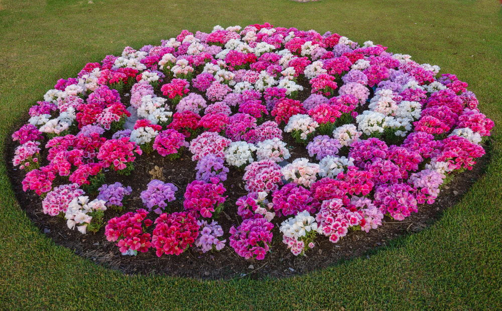 Analogous Color scheme of Flower Bed