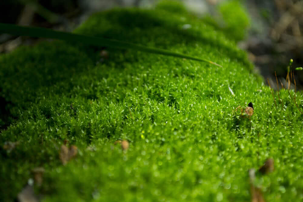 where to find moss - forest moss