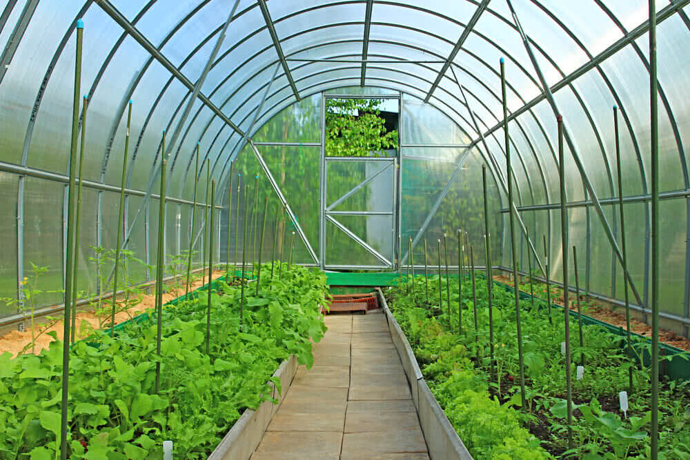 How to maintain greenhouse in september