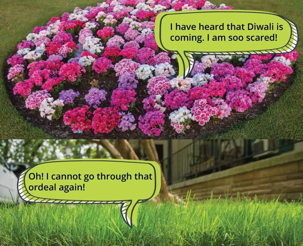 conversation of effects of air pollution on plants