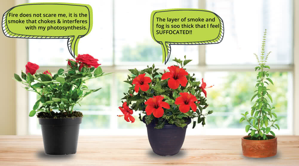 effects of air pollution on plants