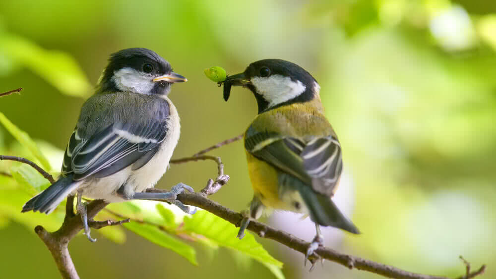 Birds talking about effect of pollution on birds