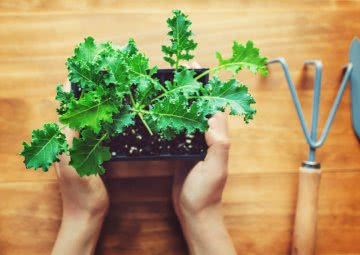 how to grow kale in a pot