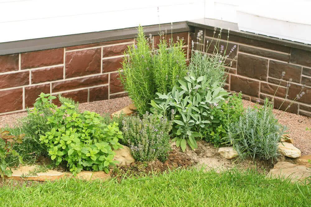 patio herb garden