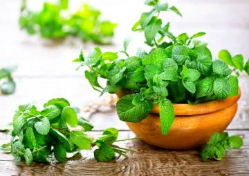 how to grow mint at home