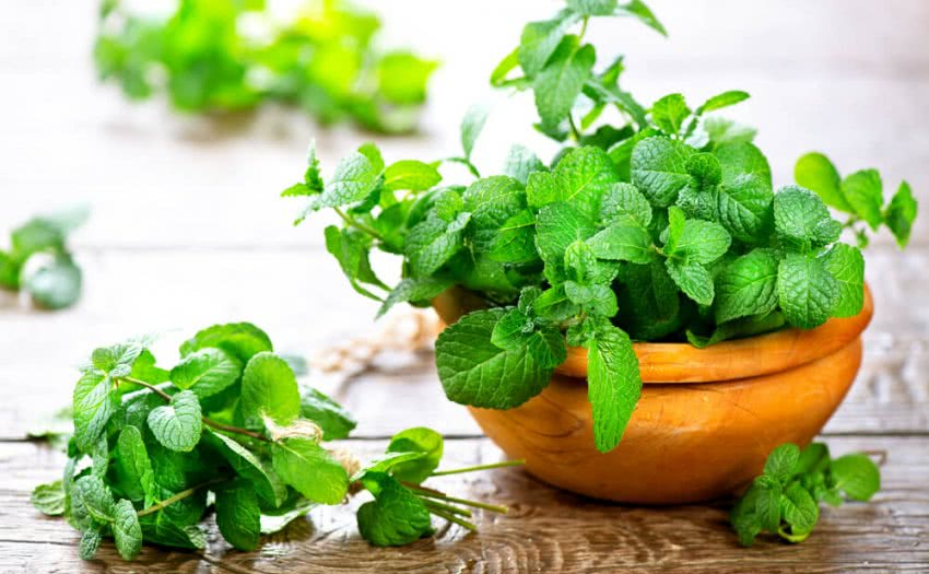 Growing Mint Herb: The Most Aromatic Kitchen Herb