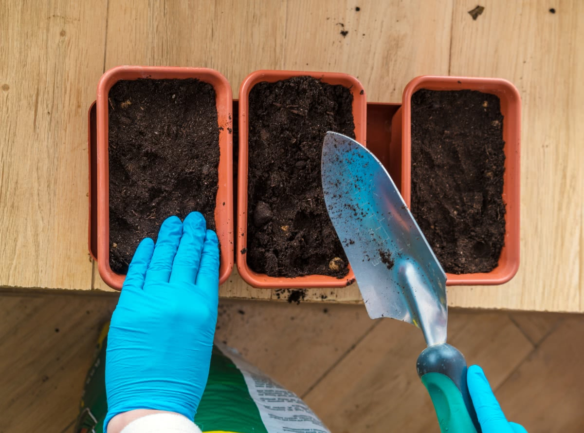 soil compaction for planting indoor plants