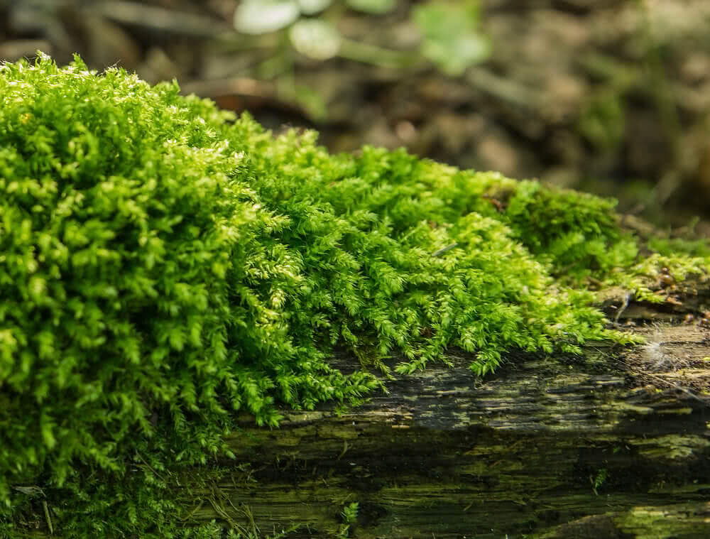 growing moss on tree