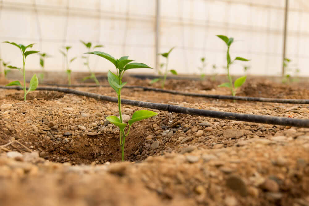 drip irrigation system in india