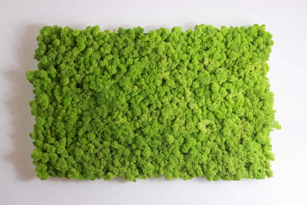 how to grow moss for wall decoration