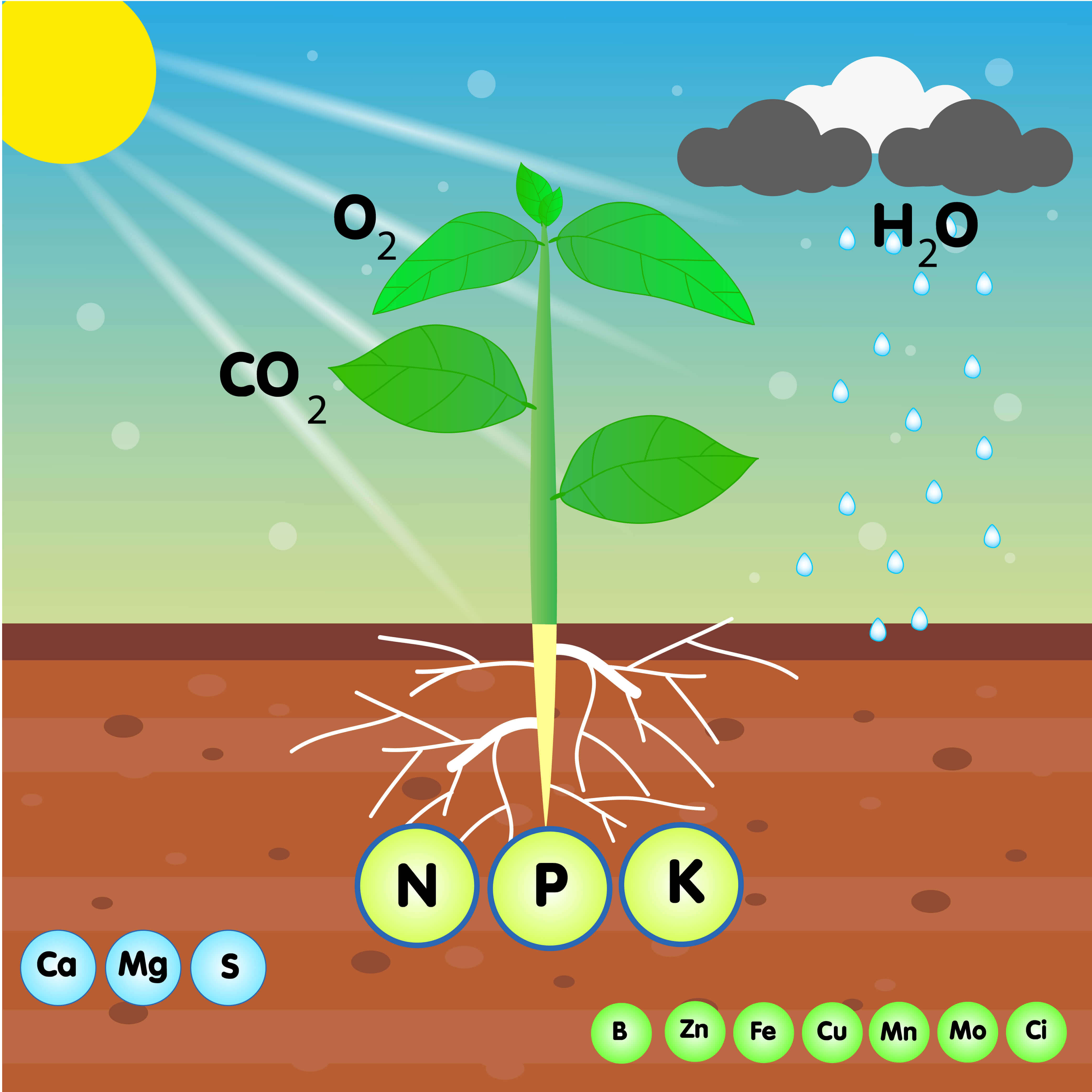 nutrients for plant growth