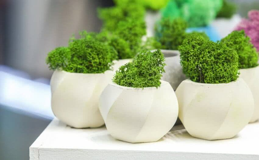 Growing Moss Indoors How To Grow Moss At Home Moss Plant