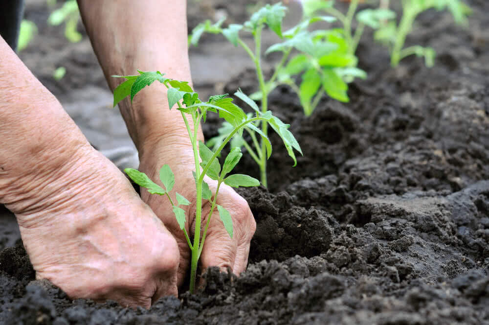 how to plant organic vegetables