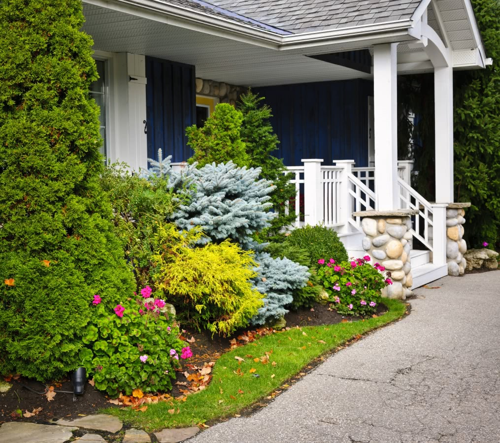 best bushes for front of house