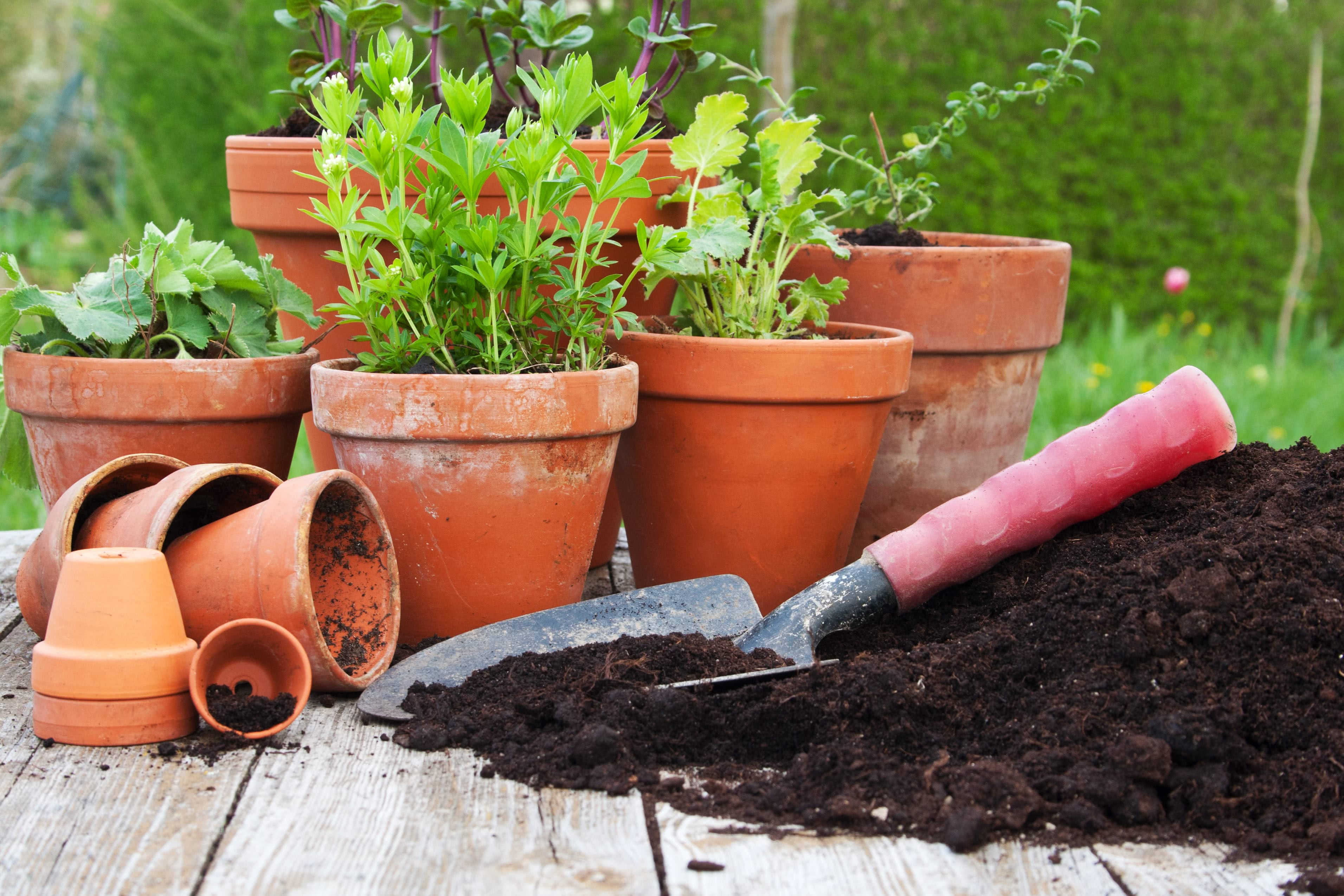Properties Of Soil And Potting Mixtures Physical Chemical Properties Of Soil
