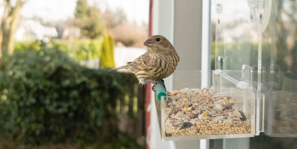 Birdfeeder on window