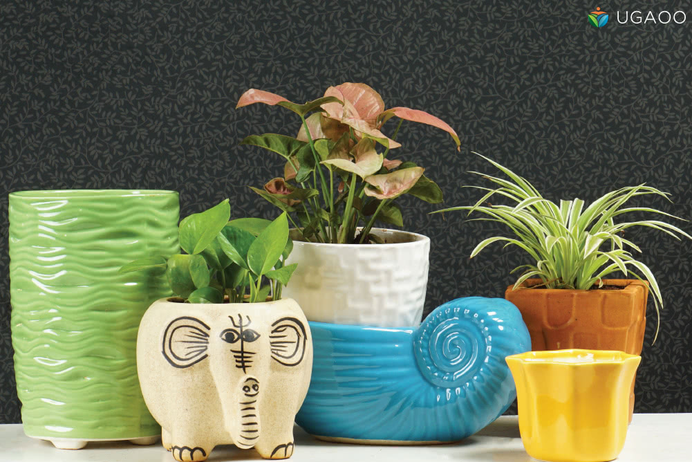Gift cute planters on teddy day