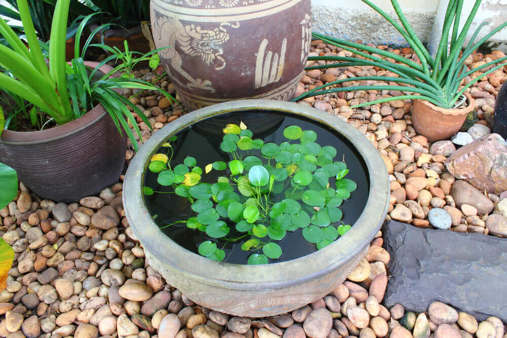 small pond water garden