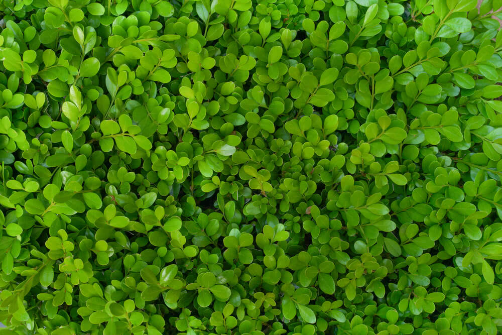 green plant for tricolor gardening