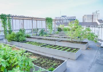how to make terrace garden or rooftop garden