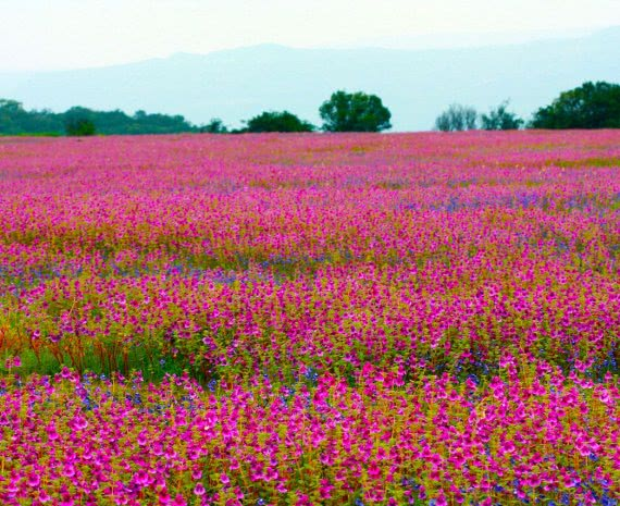 Variety of colorful flowers at Kas Plateau