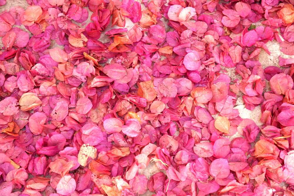 holi celebration with flower petals to save water