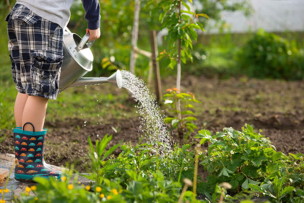 therapeutic garden or mental benefits of gardening