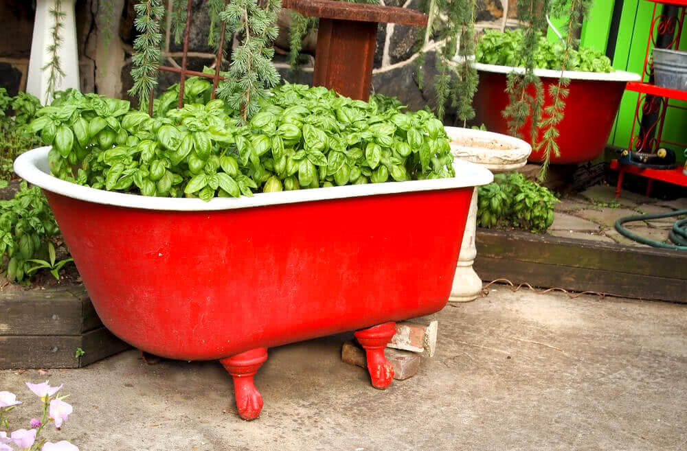 Bathtub container for growing herbs