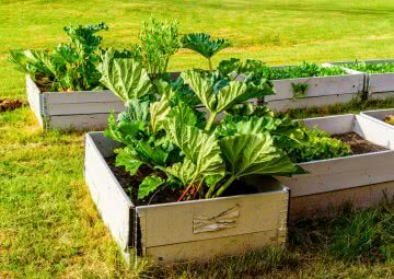 perennial vegetables in India