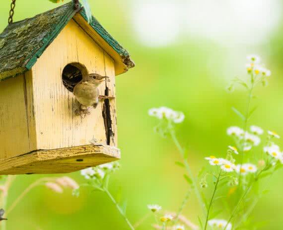 how to make a birdhouse