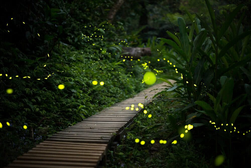 Love Fireflies? Attract Them to Your Yard This Summer ...