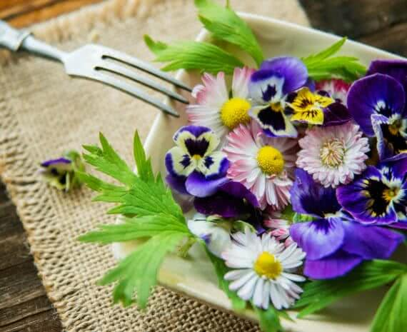 organic food: Edible flowers