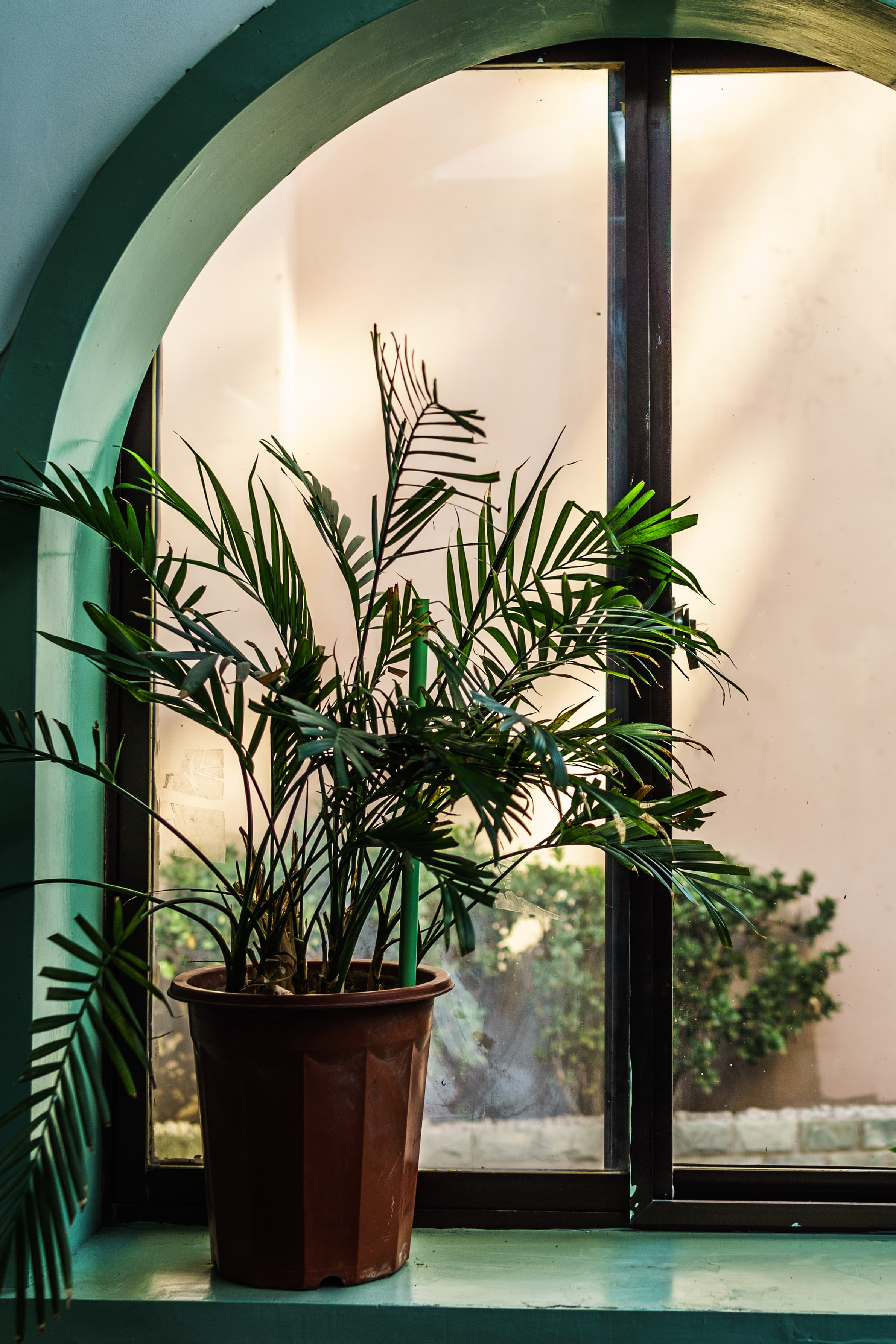 Indoor palm plant