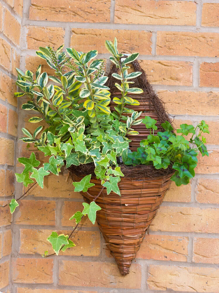 wall hanging baskets