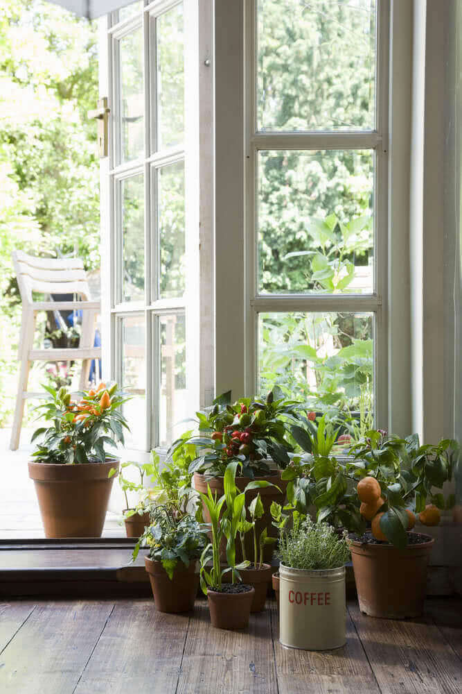 Grouped potted plants in a corner