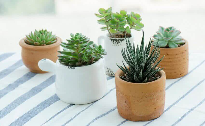 Top 10 miniature plants