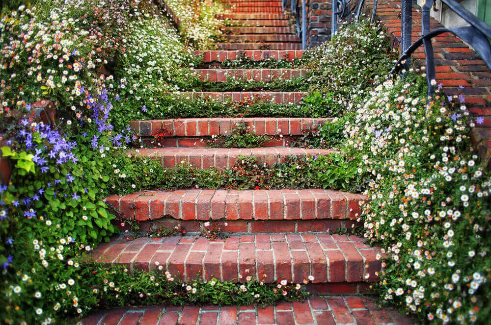 Staircase decorated with flowering plants