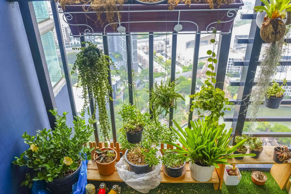 potted balcony garden