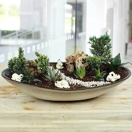 Mini garden for table top