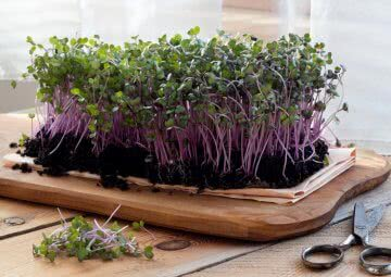 10 reasons why you should grow microgreens at home