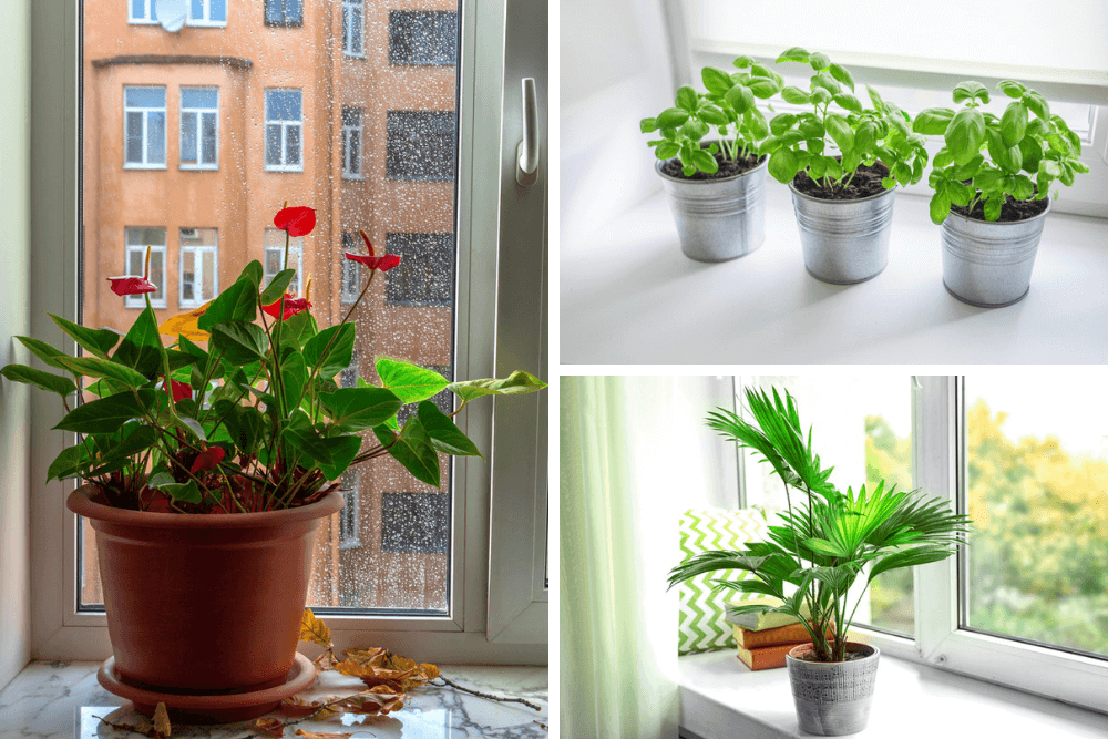 west or east facing window plants