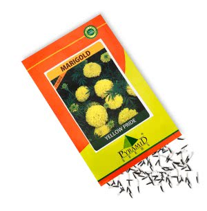 Hybrid Marigold Seeds-Yellow Pride