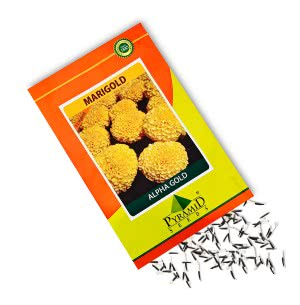 Hybrid Marigold Seeds -Alpha Gold